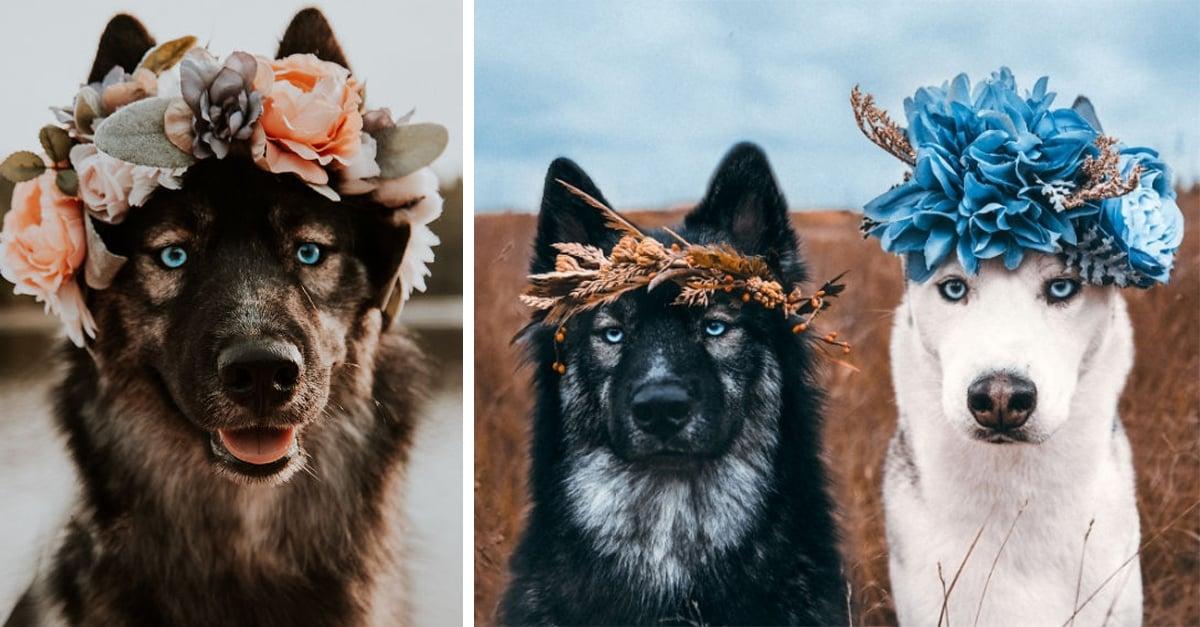 Estos huskies son los protagonistas de una amistad de cuento de hadas