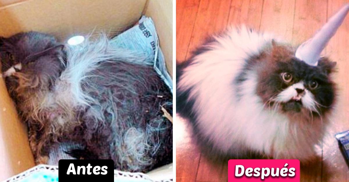 20 Increíbles transformaciones de animales antes y después de ser rescatados