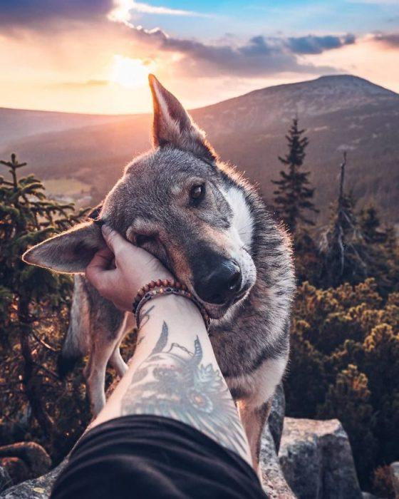 Perrito sosteniendo la mano de su dueño como en el follow me to