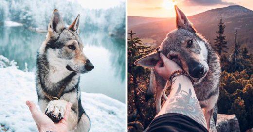 Este fotógrafo cambió el estilo fallow me to, incluyo a su perro en las fotos
