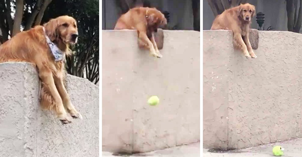 El perro más amistoso de internet deja caer su pelota a la calle para que jueguen con él