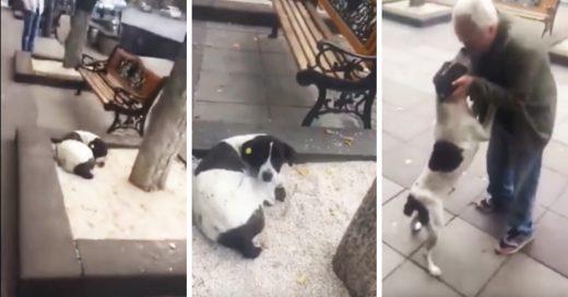 Después de 3 largos años, este hombre encuentra a su perro vagando por las calles