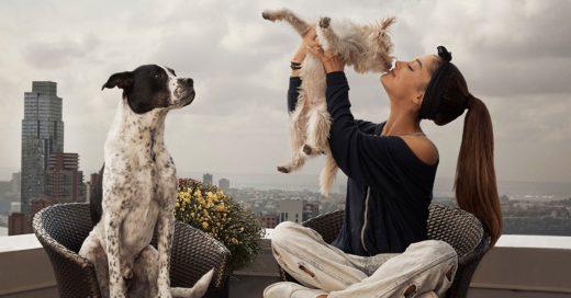 Estudio dice que tu perro trata de comprenderte cada vez que le hablas