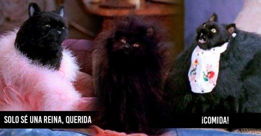 29 Señales para identificar si el gato Salem y tú son uno mismo