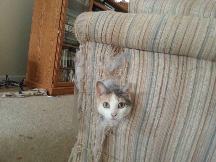 gato sacando cabeza de sillón