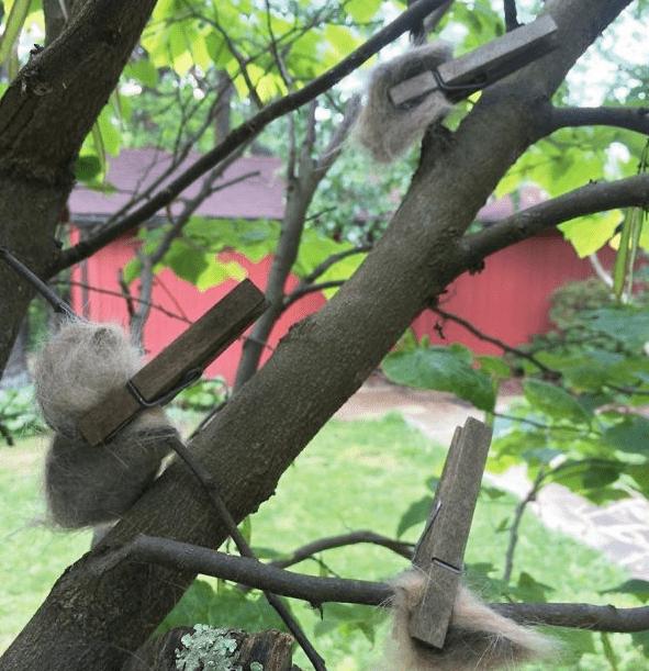 Bolas de pelo de gato encangcadas en un árbol para los pajaritos