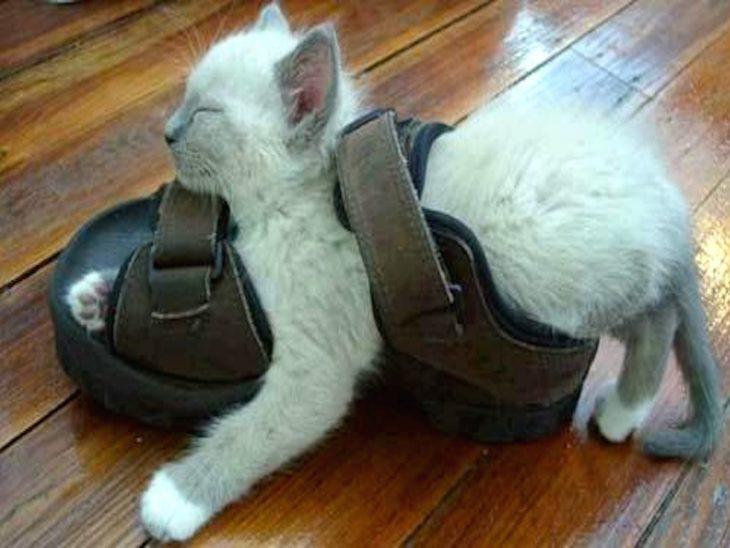 gato atorado en sandalia