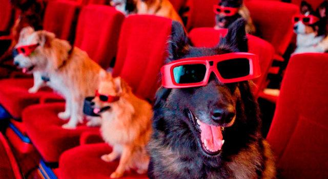 perros dentro de una sala de cine
