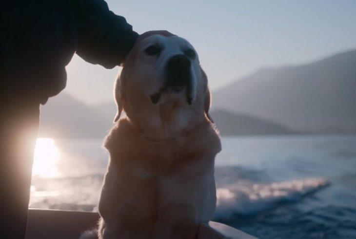 Perro labrados sentado a la orilla del mar mientras una mano lo acaricia