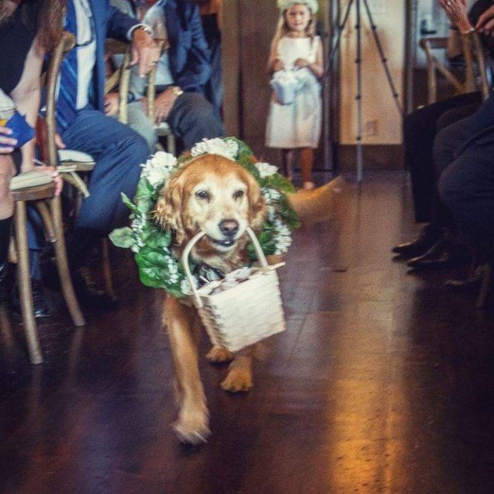 Perro cargando la canasta con los anillos de la boda