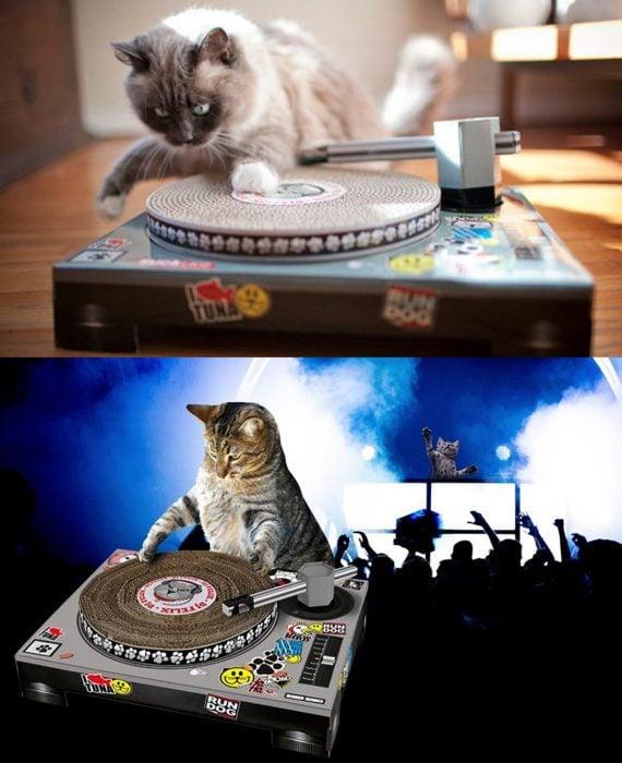 Gatos con razcador en forma de tablero DJ