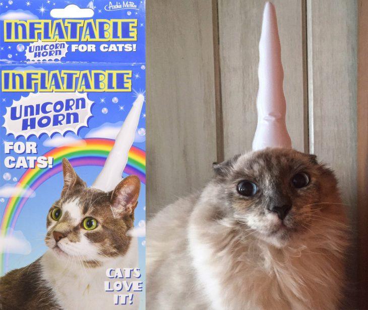 Gato asustado con cuerno de unicornio