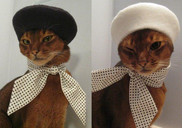 Gatos vestidos con boinas francesas