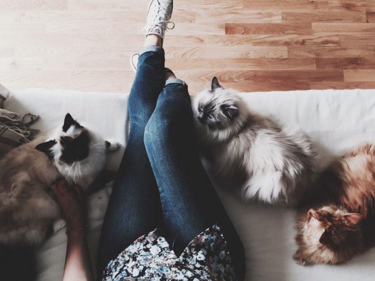 Mujer y tres gatos sentados en una sillón blanco