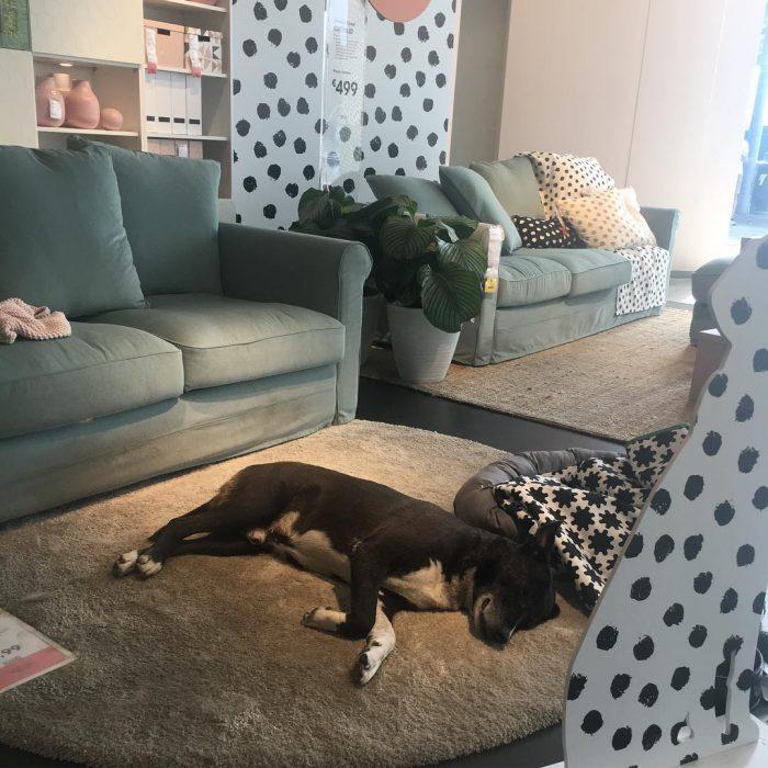 Perro dormido sobre una alfombra gris