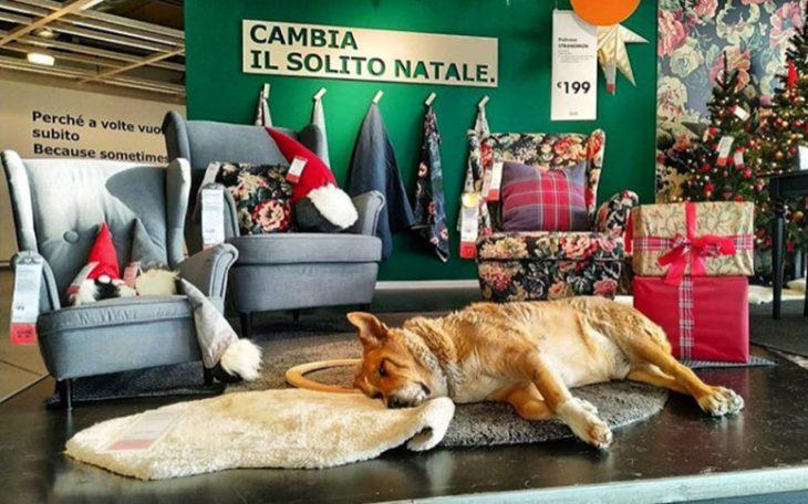 perro dormido sobre una alfombra