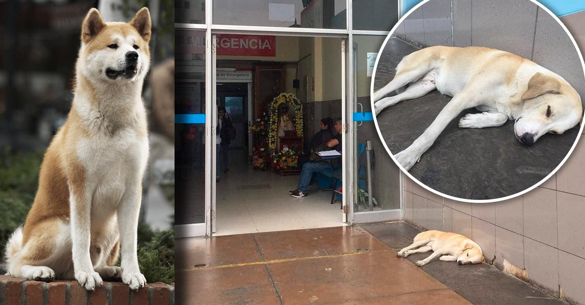 Perrito espera a su dueño que falleció en hospital; es el Hachiko peruano