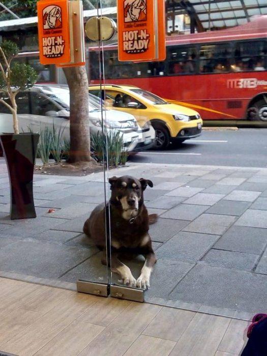 Perro gordo sentado afuera de una pizzería esperando una rebanada de pizza