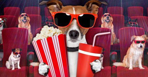 Cine Para Perros