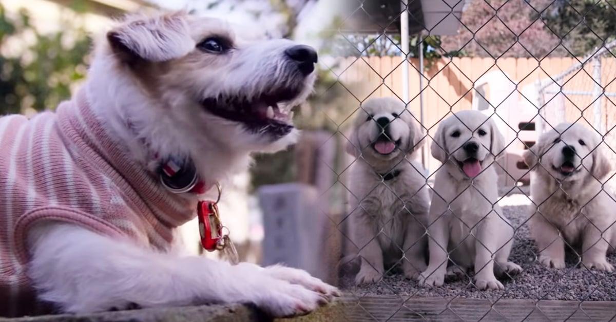Netflix anuncia su nueva serie para los amantes de los perros
