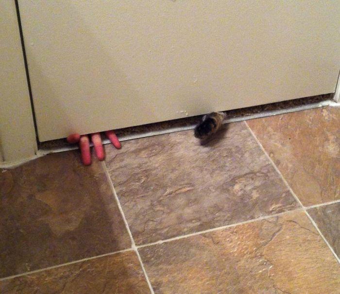 hombre y una gato metiendo las manos por debajo de la puerta