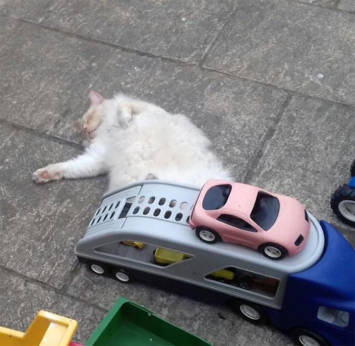 gato recostado en el piso