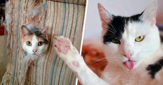 16 Cosas para entender la magia y misterio detrás de ser dueño de un gato