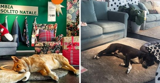 Mueblería en Italia se convierte en refugio para perros callejeros durante el invierno