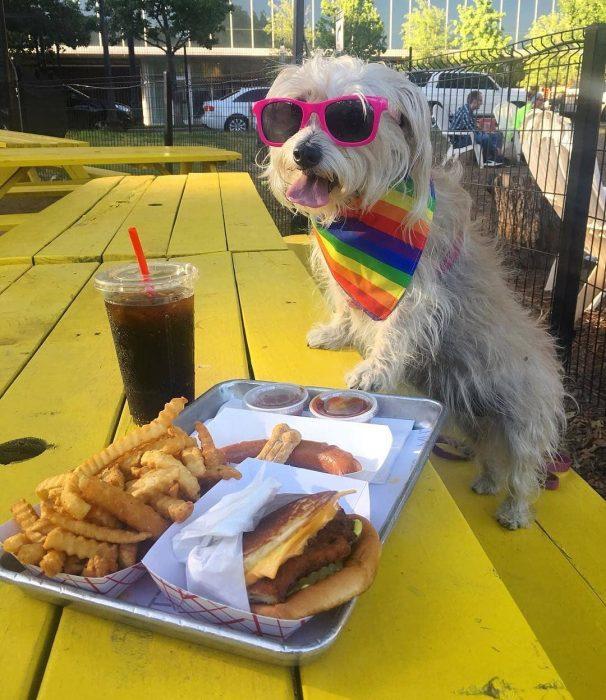 perrito con lentes rosas y comida