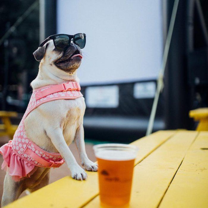 Perro con vestido rosa y lentes