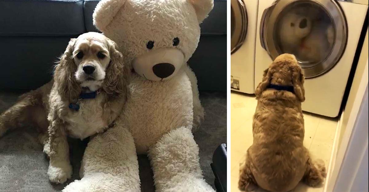 Este perrito vigila a su peluche favorito mientras lo están lavando