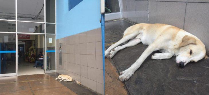 perrito recostado sobre el piso