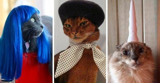 10 Productos ridículos que tu gato no necesitan pero que existen