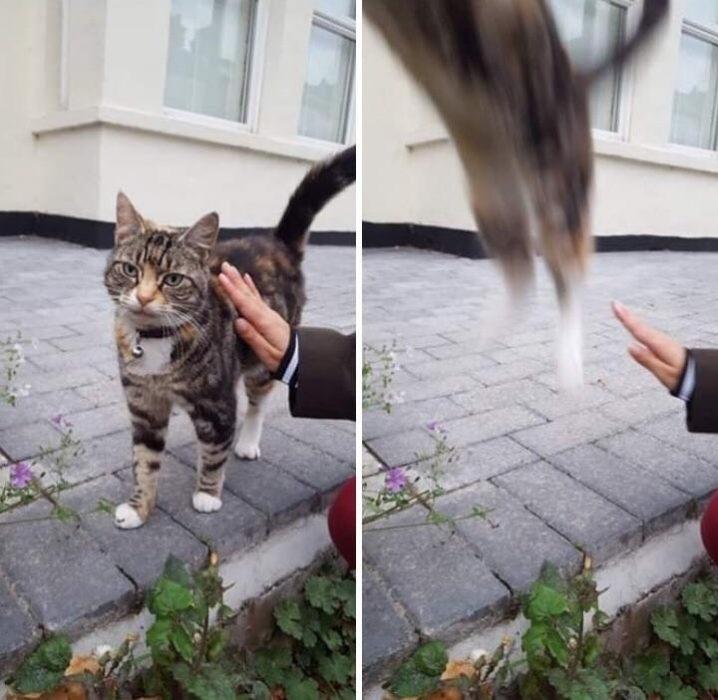 gato con mano y gato saltando