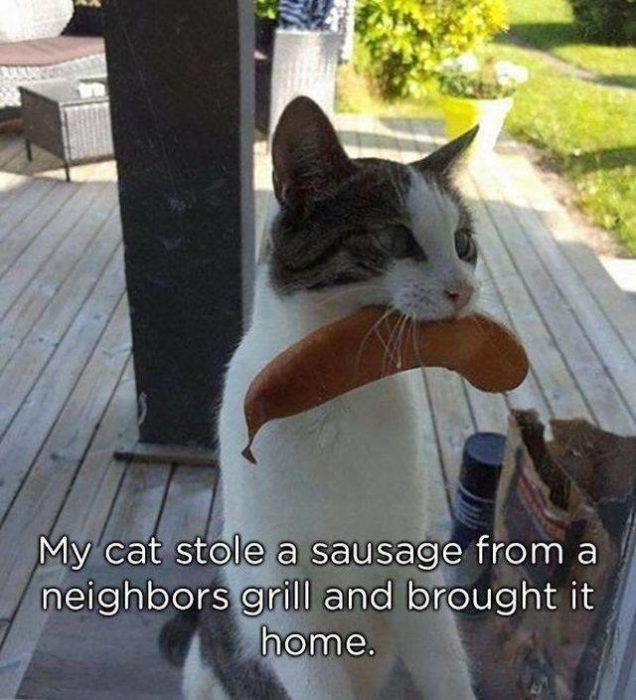 gato con salchicha en la boca
