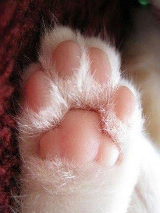 patas de gato rosas y suaves