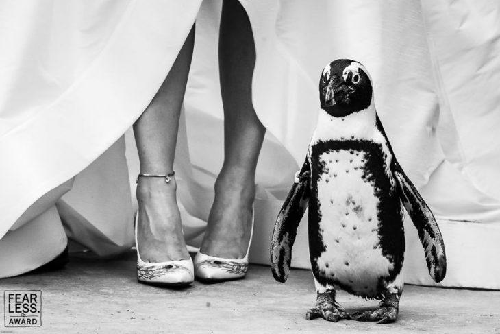 zapatos blancos de novia con plumas de pavoreal y pingüino