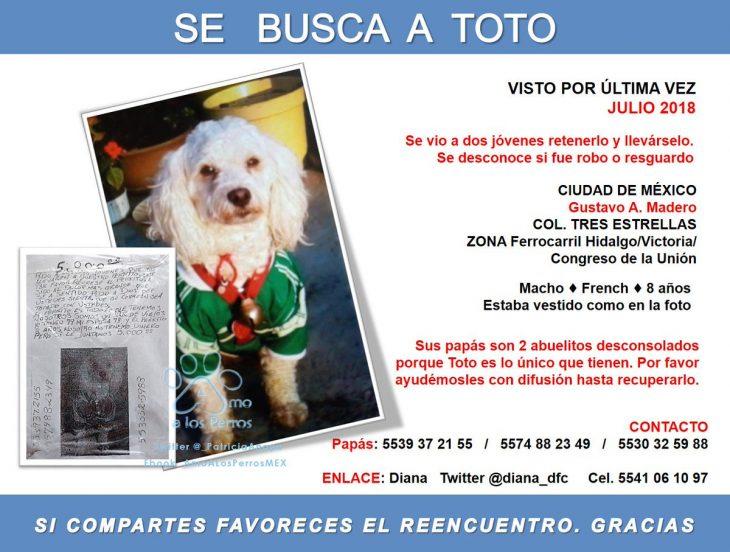 cartel de rescate para salvar a un perro