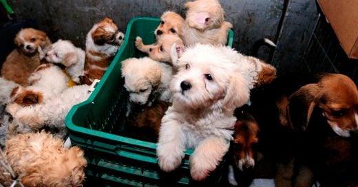 Facebook prohíbe la venta de mascotas en sus redes sociales