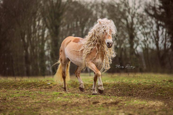 cabello con cabello largo hermoso