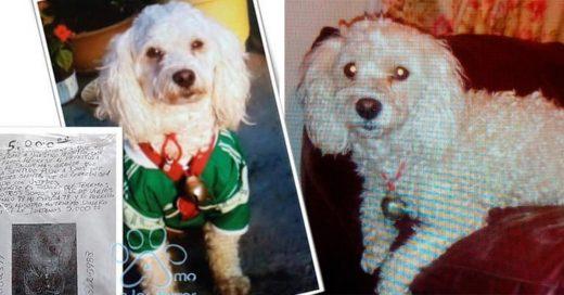 Pareja de ancianos ofrecen 5 mil pesos de recompensa por su perro