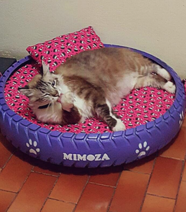 llanta mirada cama para gato café