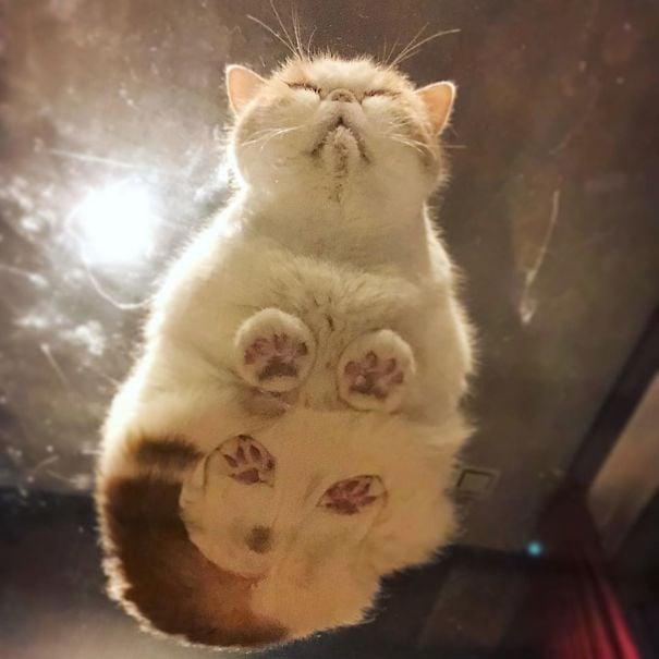 Gatos sentados en mesas de vidrio haciendo caras graciosas
