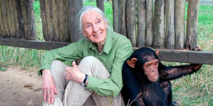 mujer cuidando de un simio