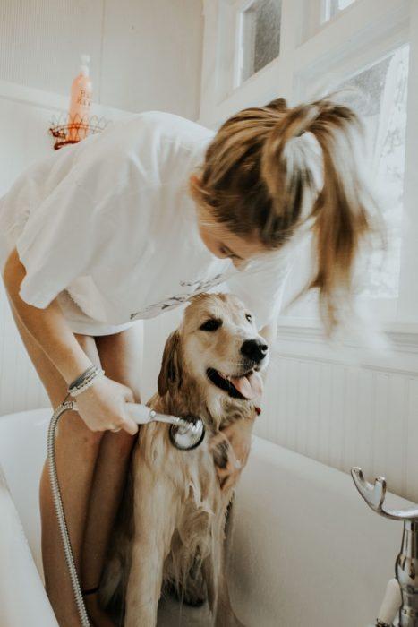 chica bañando a su perro en la regadera