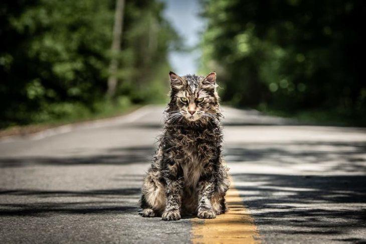 un gato en medio de la carretera