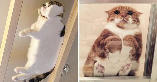 15 Divertidos gatos sentados en mesas de vidrio que se ven esponjocitos y adorables
