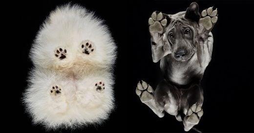 """Under-Dogs: fotógrafo retrata la ternura de cuatropatitas en """"debajo de los perros"""""""