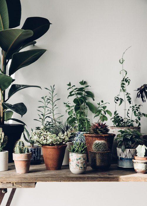 mesa con plantas en macetas