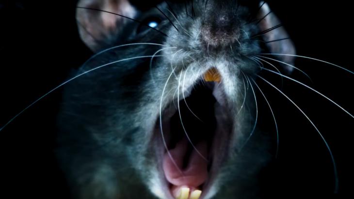 Documentales en Netflix que te darán escalofríos, Rats
